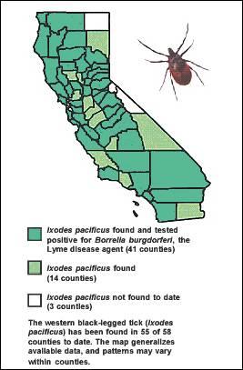DCQ Fall Equinox 2003 | Lyme Disease